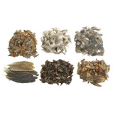 Natural Feathers Classroom Pack