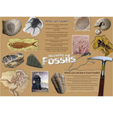 Discovering Fossils Poster